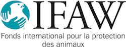 logo ifaw