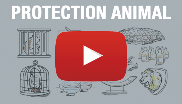 ifaw protection animal