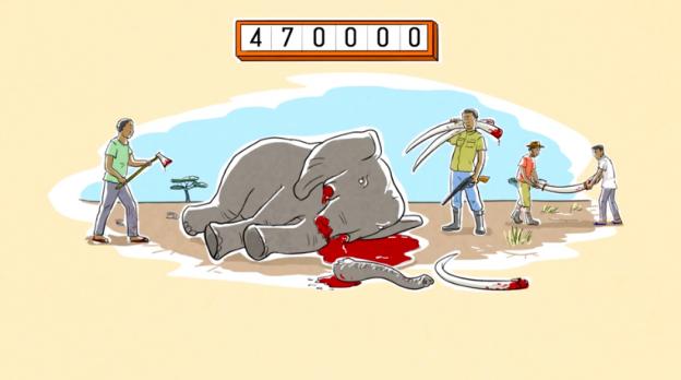 IFAW Ivory Ban